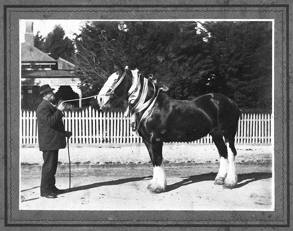 Jesse Richard STOKES(1861-1940) & prize winning clydesdale - G Levey photo
